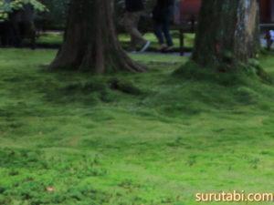 京都大原三千院の見頃は秋ではなく春から梅雨